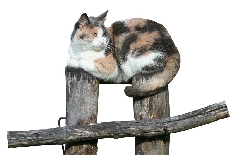 404-cat-2-small